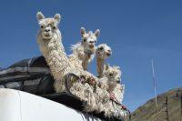 Arequipa, Peru – Transportation