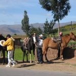 Horses-Cuzco
