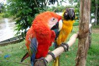 Iquitos, Peru – More Info