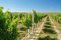 Marlborough Wine Region, New Zealand – August 2005