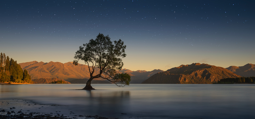 The famous lone willow tree growing near the shores of Lake Wanaka