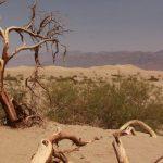 mesquite-sand-dunes