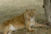 From African Lion Safari to….