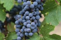 Mendoza, Argentina – Wineries