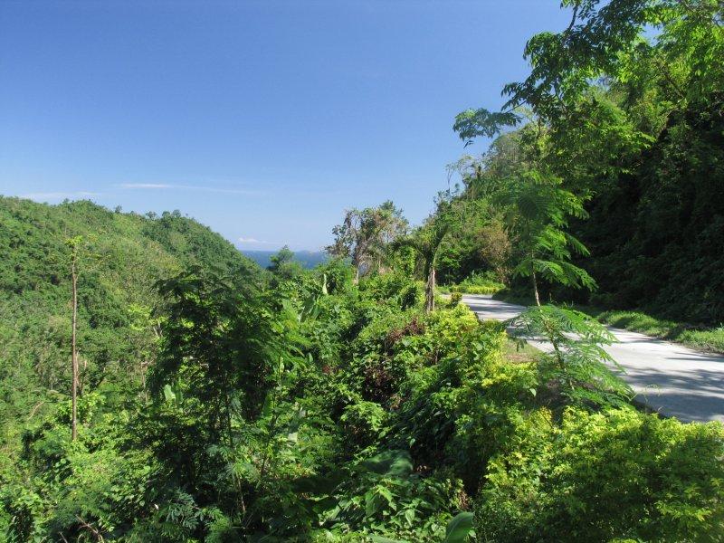 jungle-philipines