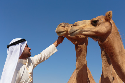 Portrait of a young Arab with a camel in the desert