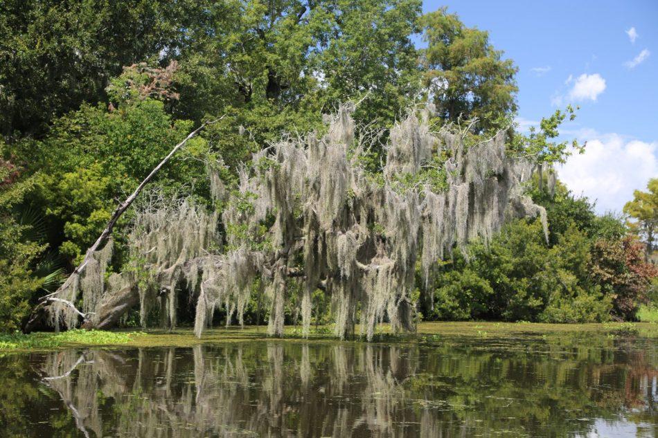 Louisian-Swamp-Tour (2)