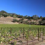 The-Grade-Cellars-Vineyard