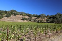 Introduction to Northern Napa Valley