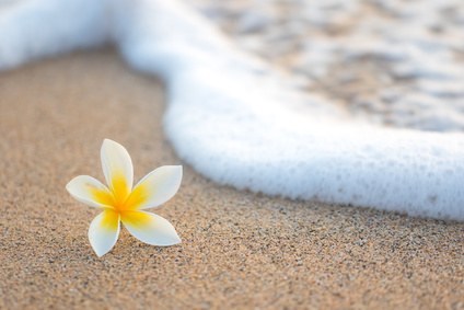 Plumeria Flower on Beach
