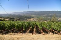The Napa Valley Cultivates a Bounty of New Guest Experiences