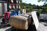 Wrapping up Harvest Napa Valley!