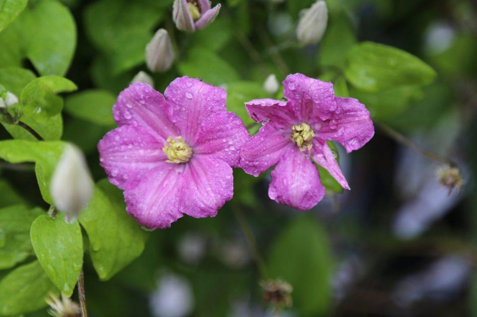 sf-flowers