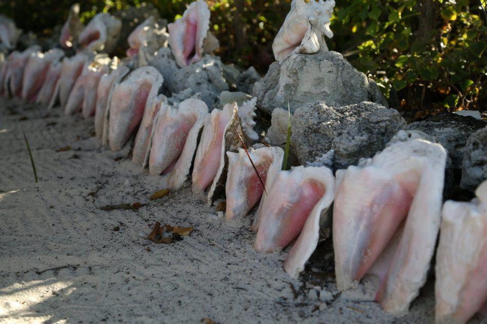 bahamas-shells