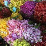 bangkok-flowers