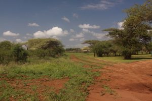 african-bush