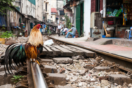 .  Vietnamese railway in Hanoi  runs through a residential area. Rooster sitting on the rails.Hanoi .Vietnam