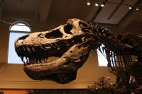 Carnegie Museum of Natural History – September 2011