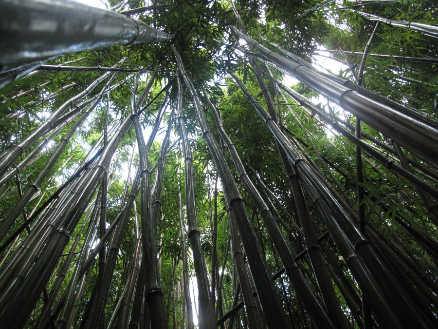bamboo-forest