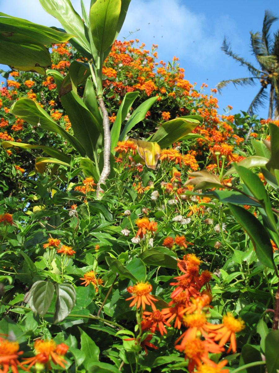 hana-flowers