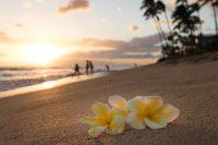 February's Sizzlin' News from Hawai'i, The Big Island