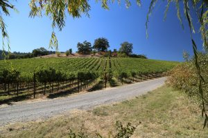 Porter-Creek-Vineyards (10)