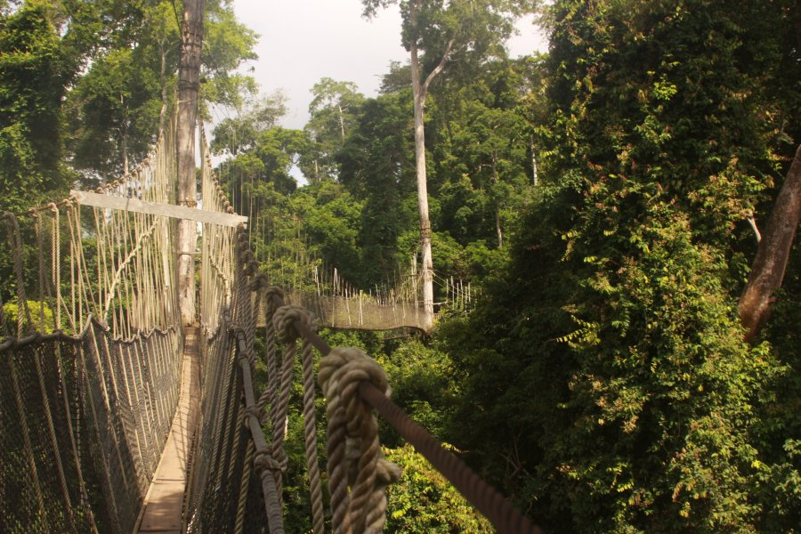 kakum-rainforest-walk