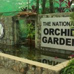 national-orchid-garden-port-moresby (2)