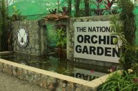 National Orchid Gardens, Port Moresby – Papua New Guinea – August 2015