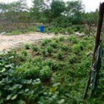 garden thailand