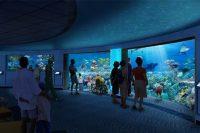 National Aquarium, Baltimore new Blacktip Reef Exhibit to Open