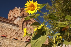 sunflower-ohrid