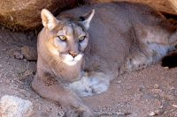 Keepers of the Wild Animal Rescue Sanctuary, Kingman, Arizona, USA