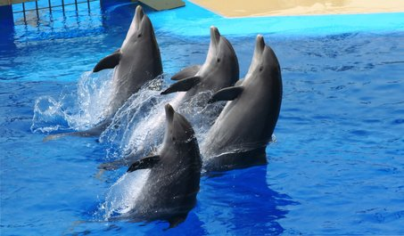 dolphins-orlando