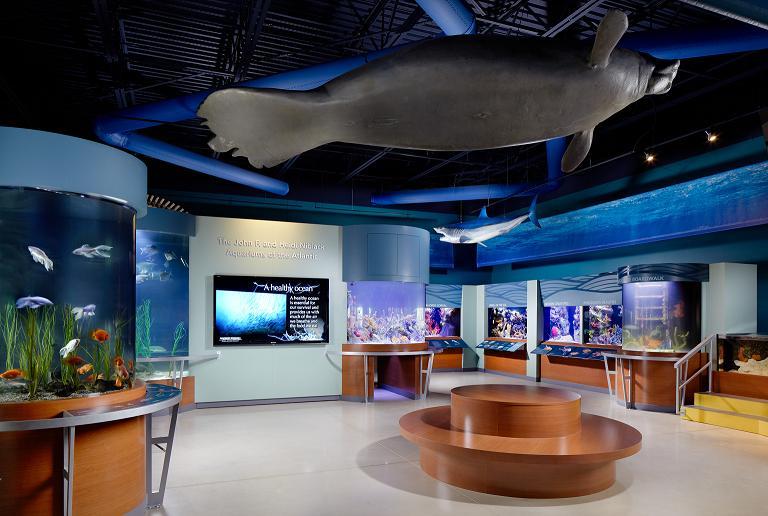 Nat Geo Wild Reality Tv Stars Build Exotic Aquarium In