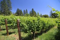 Touring Napa Valley: Tasting wine where it's made