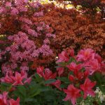 sofiero-gardens