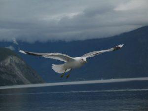 Norway12