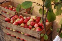 National Apple Harvest Festival returns in October