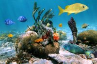 The Cancun Underwater Museum Opens Visitors Center