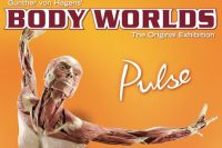 The Body Worlds Exhibition at Times Square Gets Under Your Skin and How!