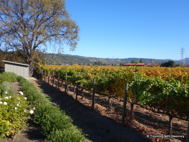 Vineyards in Napa Valley on a sunny fall day