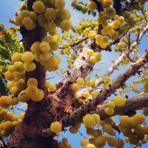 thai-star-gooseberry