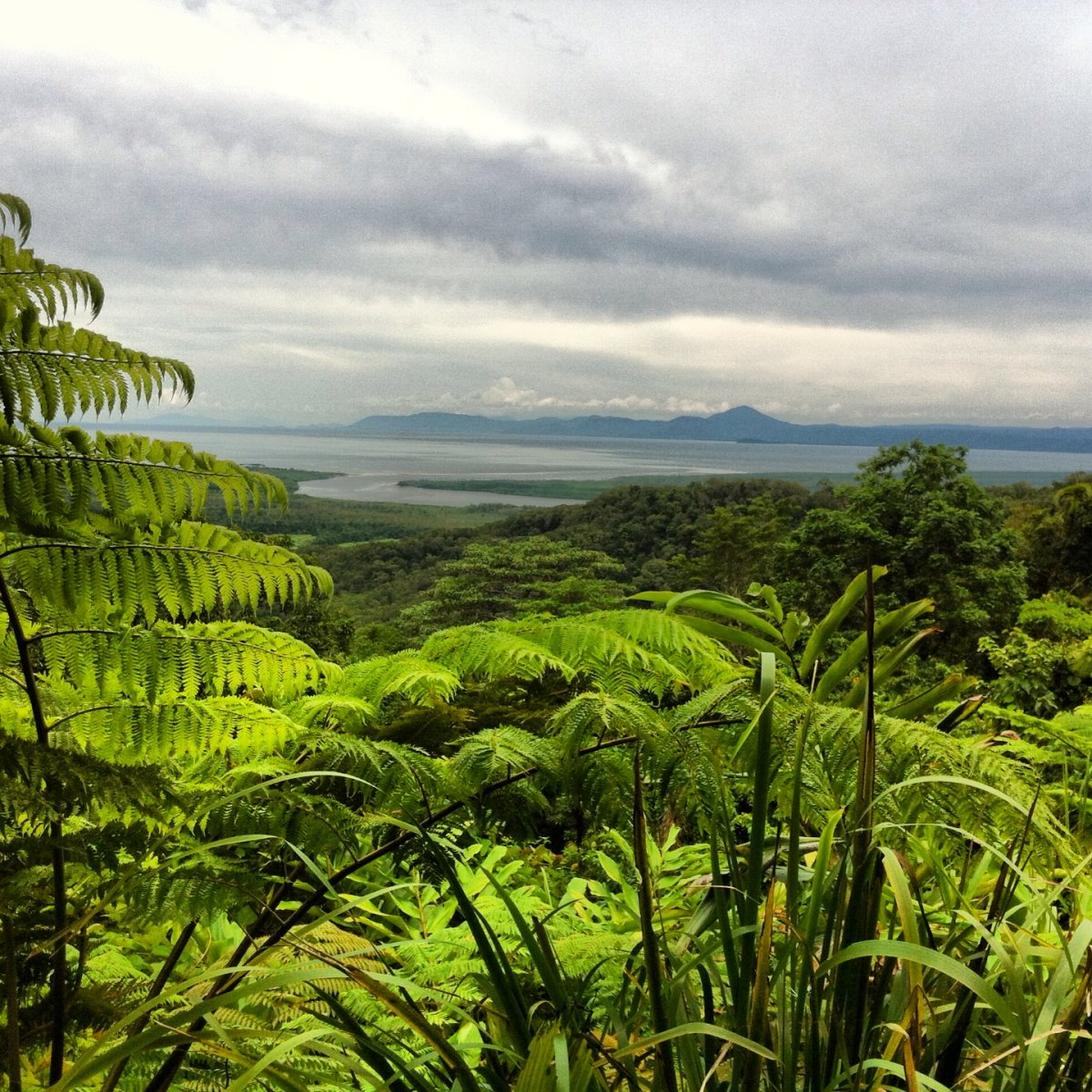 an exceptional tour with nicholas owner of daintree safaris