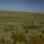 The thick bush of Flinders Chase National Park