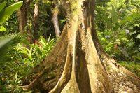 Mud Pond & Raymond Burr Gardens, Fiji