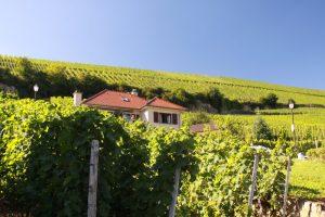mosel-wine