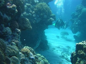 Diving, Great Barrier Reef: Image credit American­­_Rugbier
