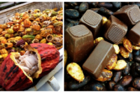 Jade Mountain, Saint Lucia Opens Interactive Chocolate Laboratory