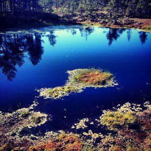 One of many ponds in Viru Peat Bog - Lahemaa National Park